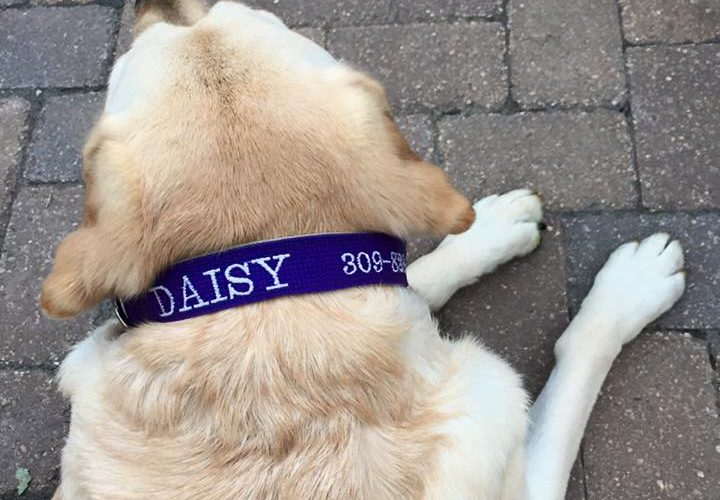 Can I Change My Dog's Name?
