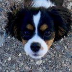puppy Elle