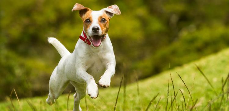 Happy dog who loves training