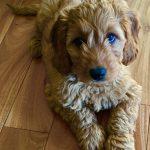 Puppy Winston